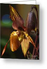 Orchid 150 Greeting Card
