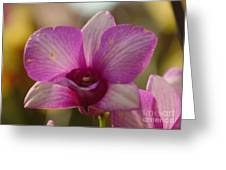 Orchid 152 Greeting Card