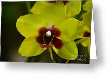 Orchid 153 Greeting Card