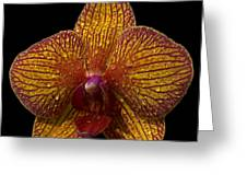 Orchid 16 Greeting Card