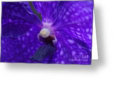 Orchid 196 Greeting Card