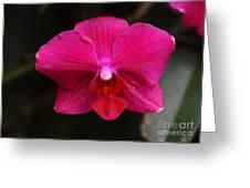 Orchid 199 Greeting Card