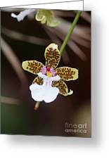 Orchid 205 Greeting Card
