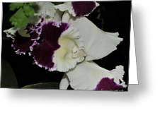orchid 220 Cattleya Moscombe 'The King'  2 of 3 Greeting Card