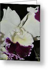 orchid 221 Cattleya Moscombe 'The King'  1 of 3 Greeting Card