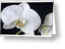 Orchid 2c Greeting Card