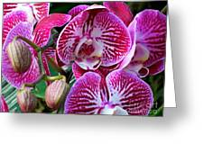 Radiant Orchid  Greeting Card