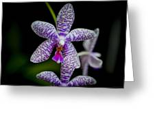 Orchid #3 Greeting Card