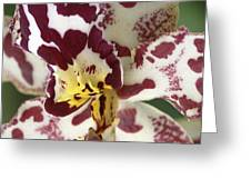 Orchid 32 Greeting Card