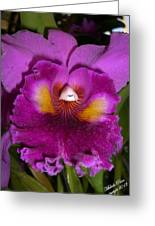 Orchid Flames Greeting Card