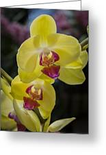 Orchid #5 Greeting Card