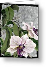 Orchid A - Phalaenopsis Greeting Card