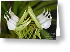 Orchid Arms Greeting Card