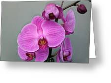 Orchid Beauty Greeting Card