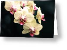 Orchid Blossom Greeting Card