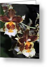 Orchid Brown Yellow White Macro Greeting Card