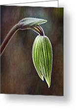 Orchid Bud Greeting Card