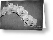 Orchid Bw Greeting Card by Hannes Cmarits