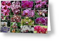 Orchid Collage 1 Greeting Card
