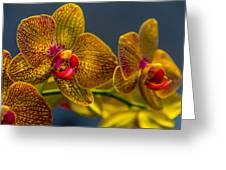 Orchid Color Greeting Card