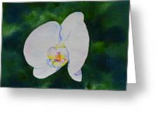 Orchid Dance 1 Greeting Card