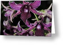 Orchid Dendrobium Lavender Star 204 Greeting Card