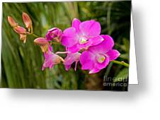 Orchid Dendrobium Greeting Card