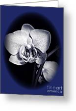 Orchid Elegance 2 Greeting Card