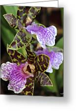 Orchid Five Greeting Card