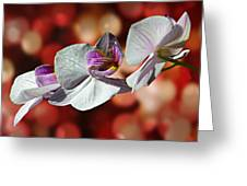Orchid Flower Photographic Art Greeting Card