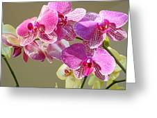 Orchid Flowers Art Prints Pink Orchids Greeting Card