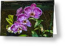 Orchid Flowers Growing Through Old Wooden Picture Frame Greeting Card