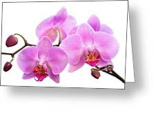 Orchid Flowers II - Pink Greeting Card