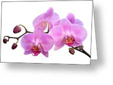 Orchid Flowers - Pink Greeting Card