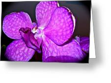 Orchid From Art Gallery Greeting Card