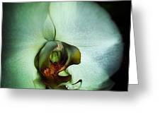 Orchid Ghost  Greeting Card by Natalya Karavay