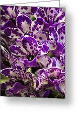 Orchid Grouping Greeting Card