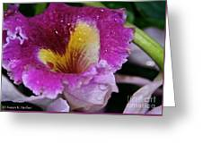 Orchid Heart And Soul Greeting Card