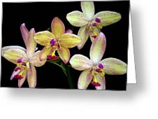 Orchid In Blossom Greeting Card