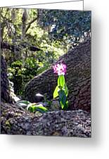 Orchid In Tree 2 Greeting Card