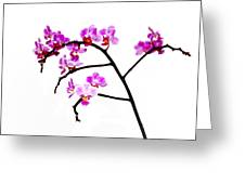 Orchid In White  Greeting Card
