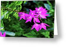 Orchid (laelia Gouldiana) Greeting Card