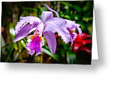 Orchid Life Greeting Card