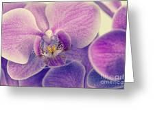 Orchid Lilac Dark Greeting Card