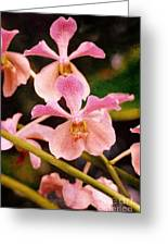 Orchid Number 17 Greeting Card