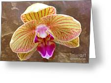 Orchid On Marble Greeting Card