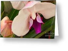 Orchid One Greeting Card