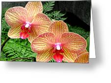Orchid Pair Greeting Card