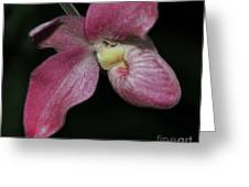 Orchid Phragmipedium Hanna Popow 2 Of 2 Greeting Card