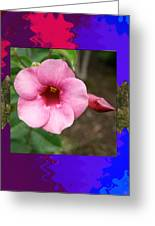 Orchid Pink Flower Photographed At Costa Rica Sensual Smile Graphic Dital Painted Background Ideal Greeting Card
